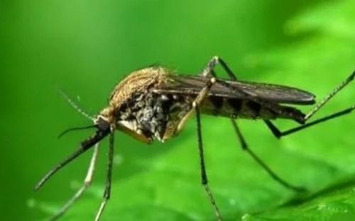 Как защитить себя от комаров в огороде?