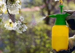 Когда и как правильно опрыскивать плодовые деревья?