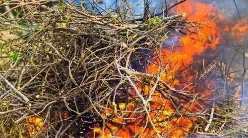 Правила сжигания листвы на участке