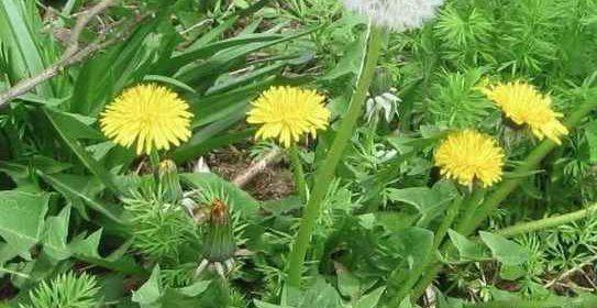Лучший способ борьбы с сорняками и травой на огороде