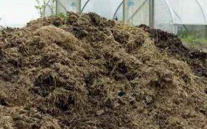 Помет кроликов - эффективное удобрение для огорода