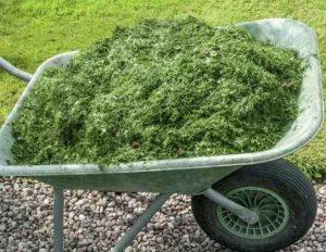 Самое простое удобрение для подкормки огородных культур