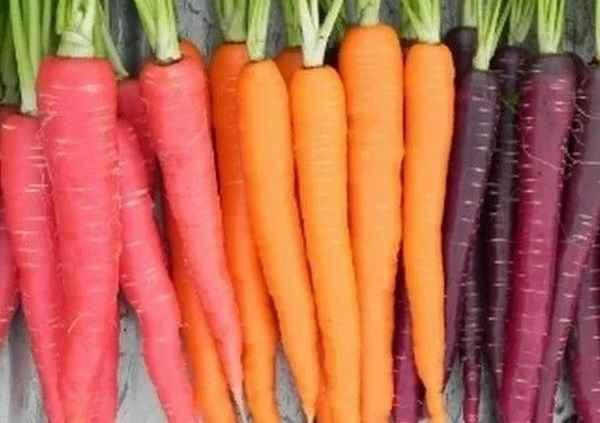 Ошибки при уборке и хранении моркови
