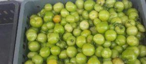 Как сохранить помидоры свежими до декабря