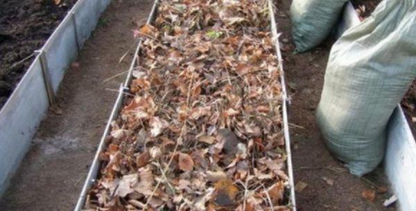 Укрытие для чеснока из опавшей листвы